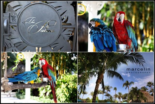 the palms hotel miami beach